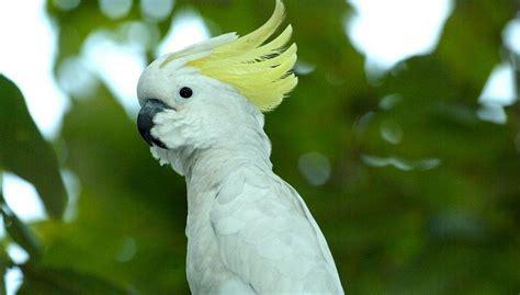 50 jenis burung langka dan unik dilengkapi dengan gambar asli. 20 Jenis Burung Langka di Indonesia Lengkap dengan Gambar | Hewan langka, Hewan, dan Gambar