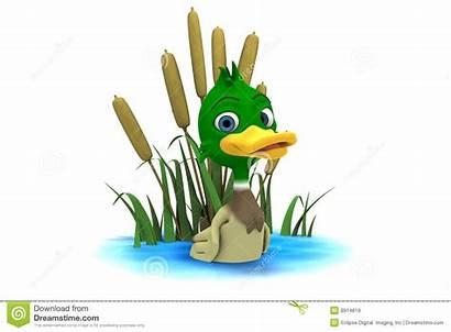 Pond Duck Mallard Cartoon Ducks Clipart Sitting