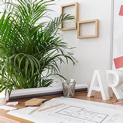 Büro Pflanzen Pflegeleicht : b ropflanzen beliebte pflanzen f rs b ro b robegr nung mit pflanzen ~ Michelbontemps.com Haus und Dekorationen
