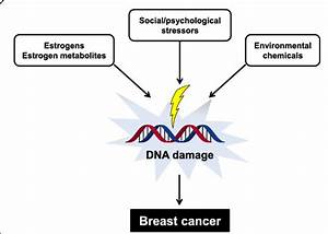 Various Factors Can Cause Dna Damage And Increase The Risk