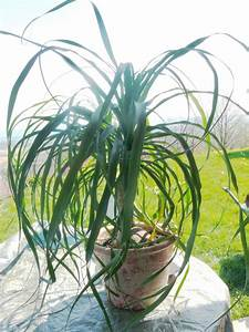 Plante Verte D Appartement : rempoter ses plantes d 39 appartement le pouvoir des fleurs ~ Premium-room.com Idées de Décoration