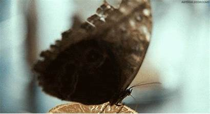 Butterfly Animated Gifs Animals Insects Butterflys Butterflies