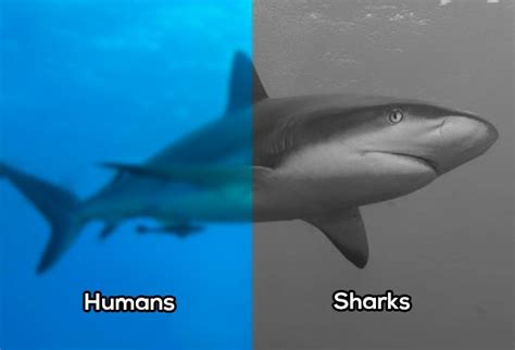 can sharks see color how a few different animals see the world thechive