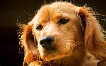 Desktop Puppies Puppy Backgrounds Dogs Wallpapers Wallpapersafari