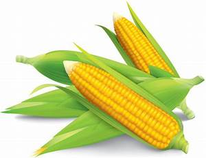 Corn field free vector download (535 Free vector) for ...