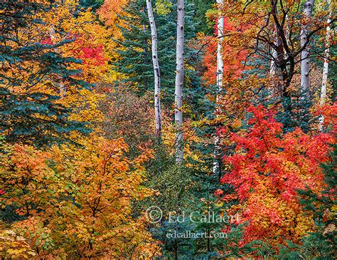 fall color mogollon rim apache sitgreaves