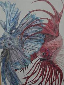 #fish #draw Título: Ying Yang Betta Técnica: esferos ...