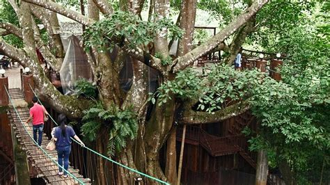 Treehouse coffee shop — which features an airy interior with hanging plants and skylights, as well as a back patio space — bills itself as a cool 'secret' hangout to drink a coffee while you are making. Tree House Coffee Shop - YouTube