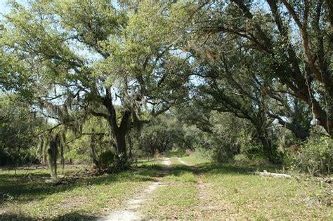 Xeric Hammock by Hickory Hammock Wildlife Management Area Gfbwt