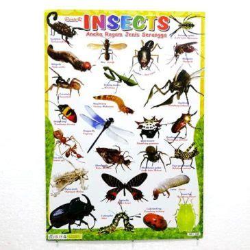 Harga Jaring Kalis Serangga poster mengenal jenis serangga pusaka dunia