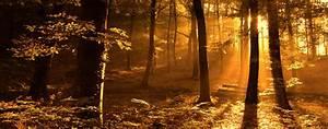 Foret à Bois : la cdc lance le club carbone for t bois pour valoriser la s questration du co2 par la fili re ~ Nature-et-papiers.com Idées de Décoration