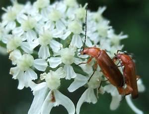 R Und S Pulheim : andere insektengruppen die bl tenpflanzen best uben landesbildungsserver baden w rttemberg ~ Eleganceandgraceweddings.com Haus und Dekorationen