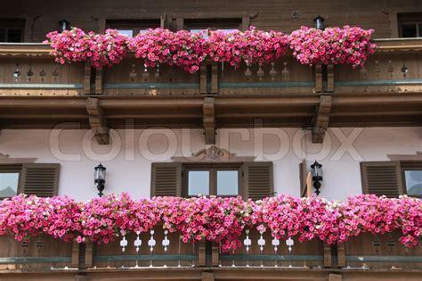 blumen für den balkon viele rosa bl 252 hende blumen auf dem balkon in blumenk 228 sten des hauses in den sch 246 nen sommer