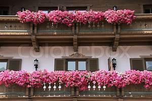 Blumen Für Den Balkon : viele rosa bl hende blumen auf dem balkon in blumenk sten ~ Lizthompson.info Haus und Dekorationen