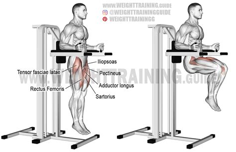 chair leg raises muscles captain s chair leg raise exercise guide and