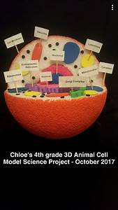 4th Grade Science Project 3d Animal Cell Model October