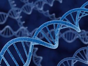 Study Identifies Gene Potentially Responsible for Human ...