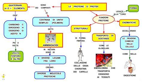 protidi proteine composizione  funzione studentville