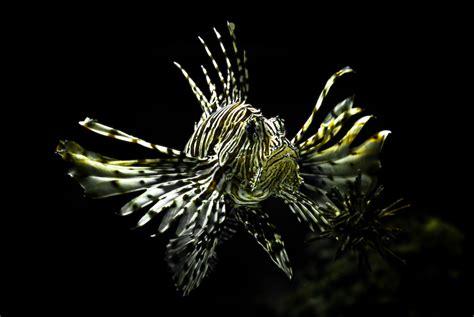 dragonfish   dark depths photo  wallpaper cute
