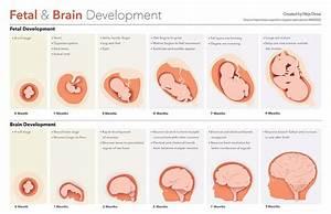 Pin By Sahreya On Prenatal Development