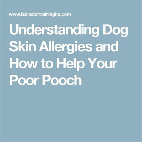 Best  Dog Skin Allergies Ideas On Pinterest Skin