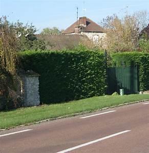 Maison Pierre 77 : pierre perret papotage briard city blog de coulommiers ~ Melissatoandfro.com Idées de Décoration