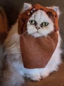 wars cat ewok cat by the official wars via flickr wars