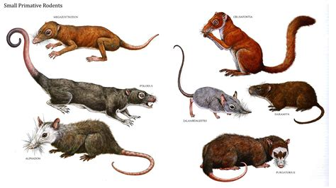 Don't Let Rodents Invade Your Home Your House Helper