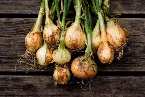 shallots  onions