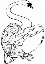 Swan Coloring Clipart Swans Walk Animal Clip Getcoloringpages Getdrawings Please Clipground Walking Results sketch template
