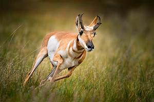 7 Of The Fastest Land Dwelling Animals On Earth ...