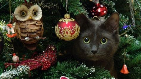 xmas tree made out of cats tips on how to keep cats out of trees