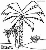 Palm Coloring Tree Pages Colouring Trees Beach Drawing Tahiti Pretty Template Sheet Vietti Popular Getdrawings Sketch Birijus Colorings sketch template