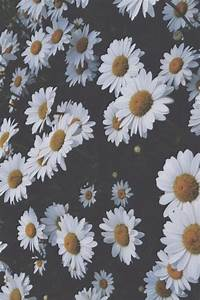 Cool hipster vintage Grunge Teen flower Daisy Faded ...