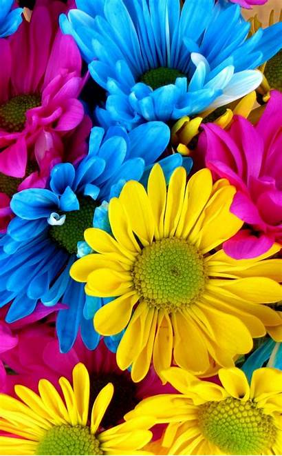4k Colorful Yellow Flowers Phone Pink Wallpapers