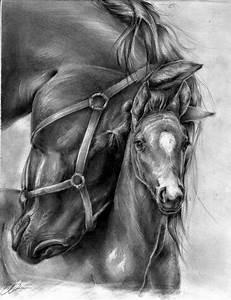 40 Realistic Animal Pencil Drawings | Animal pencil ...