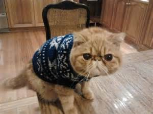 sweater for cat animals wearing sweaters jumpers cat 2 lazer