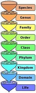 File Biological Classification L Pengo Svg