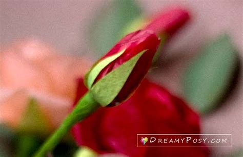 tissue paper rose template how to make tissue paper rose free template step by step