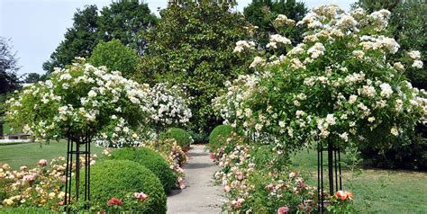 Garten Kaufen Eltville by Rosens 228 Ulen Ranks 228 Ulen Garten Obelisken Aus Metall Vom