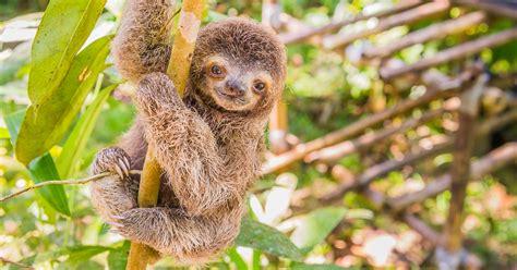Photos of Adorable Baby Animals in Costa Rica • James Kaiser