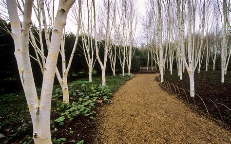 anglesey abbey winter gardens national trust cambridges