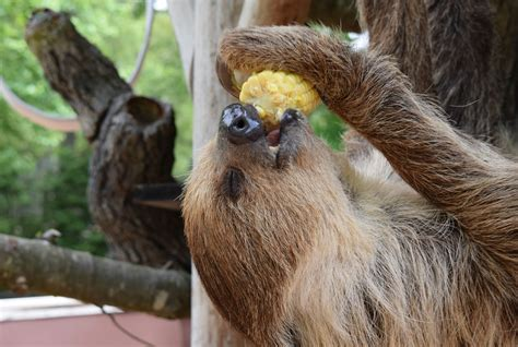 sloth eating zoo southwick