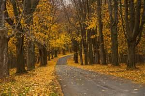 Country Road Fall Scene Screensaver