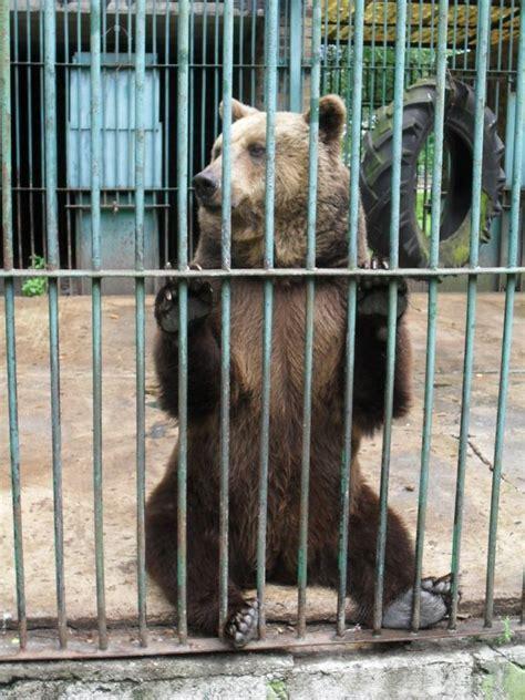zoos teach  biodiversity    matter