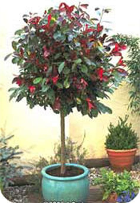 exotische potplanten met bloem struiken en bomen planten in potten voor op terras en