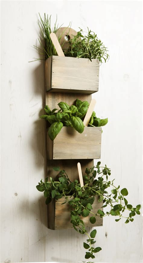 shabby chic wall mounted herb planter kit  seeds