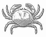 Crab Drawing King Getdrawings sketch template