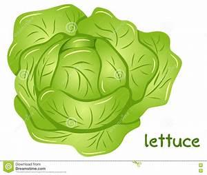 Lettuce clipart head lettuce - Pencil and in color lettuce ...