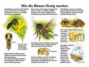 Wie Machen Bienen Honig : wie die bienen honig machen 30x40 cm insekten ameisen ~ Whattoseeinmadrid.com Haus und Dekorationen